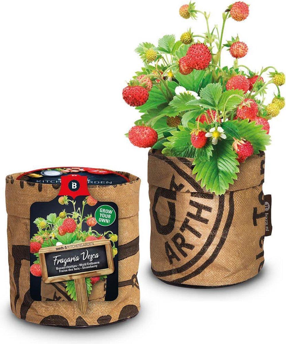 Compleet Keukentuintje aardbeien kweken inclusief biologische potgrond en een zakje aardbeizaden