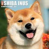 Just Shiba Inus 2021 Wall Calendar (Dog Breed Calendar)