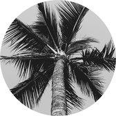 Schilderij Fotokunst Rond - Palmbladeren | 50 x 50 cm | PosterGuru