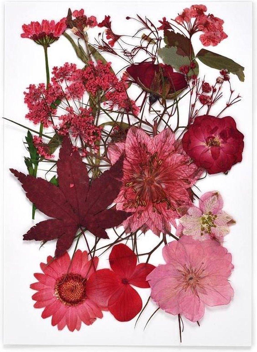 Echte droogbloemen - rood - epoxy hars - sieraden - decoratie