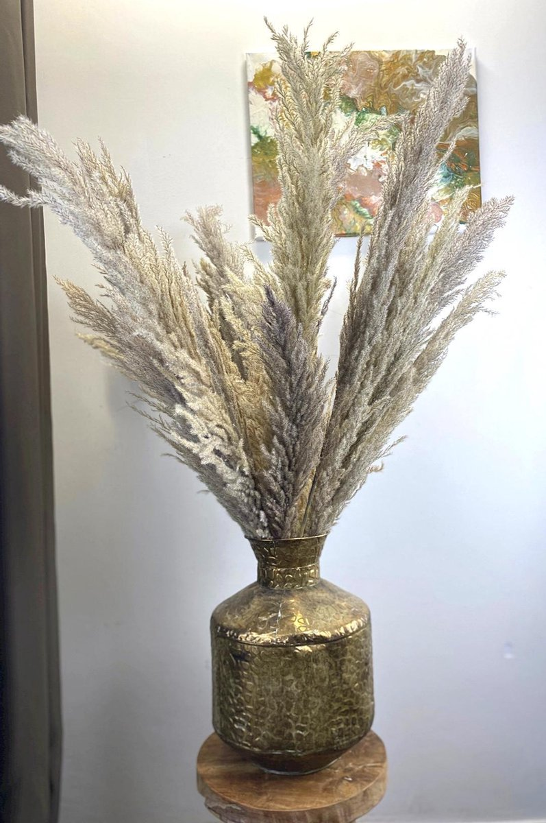 Pampas pluimen   15 stuks   Naturel   100cm   Dried Flowers   Gedroogde bloemen   Droogbloemen   Cor