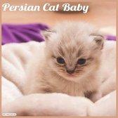 Persian Cat Baby 2021 Wall Calendar