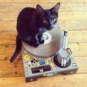 Suck UK Kat Krabben Huisdier Speelgoed Kartonnen Patenspeler & DJ Mixer