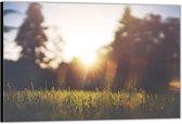 Dibond –Zonsondergang tussen de Bomen– 40x30 Foto op Aluminium (Wanddecoratie van metaal)