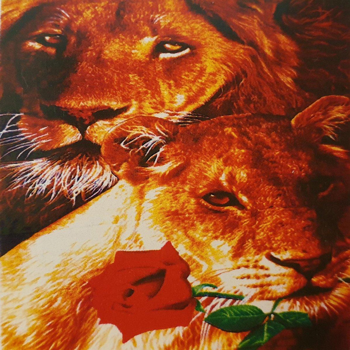 Diamond Painting Volwassenen   Leeuw Roos   25 x 35 cm   Diamond Painting Pakket Volledig   Diamond Painting Kinderen  Inclusief Tools