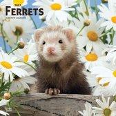Ferrets Kalender 2021