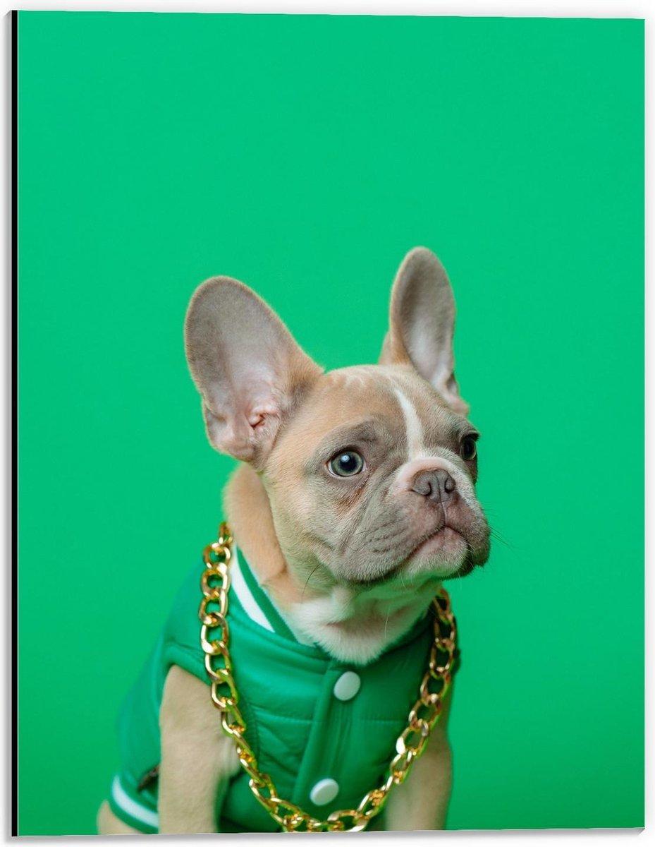 Dibond - Hond met Groen Pakje en Ketting  - 30x40cm Foto op Aluminium (Met Ophangsysteem)