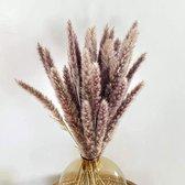 Pampas pluimen – Natuurlijke tint - 15 stuks – Pampas gras – 75 cm – Droogbloemen – Cortaderia – Droogbloemen boeket – Pampasgras gedroogd