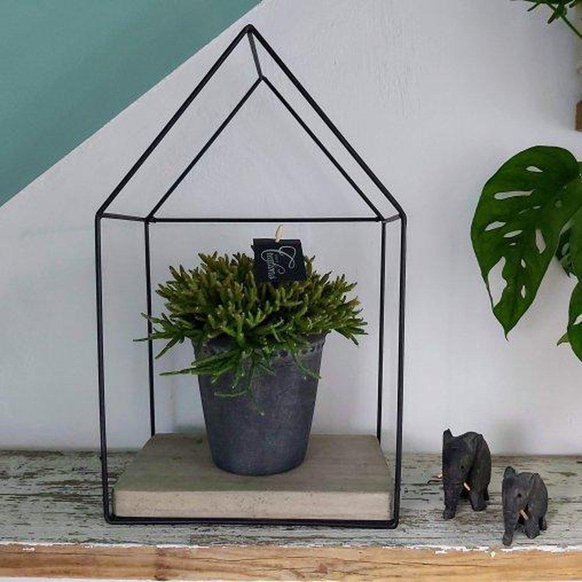 Kom snel kijken KADO-TIP! POT-PLANT COMBINATIES Tiny Greenhouse