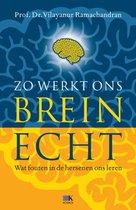 Zo Werkt Ons Brein  Echt