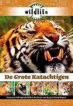 Wildlife - Grote Katachtigen
