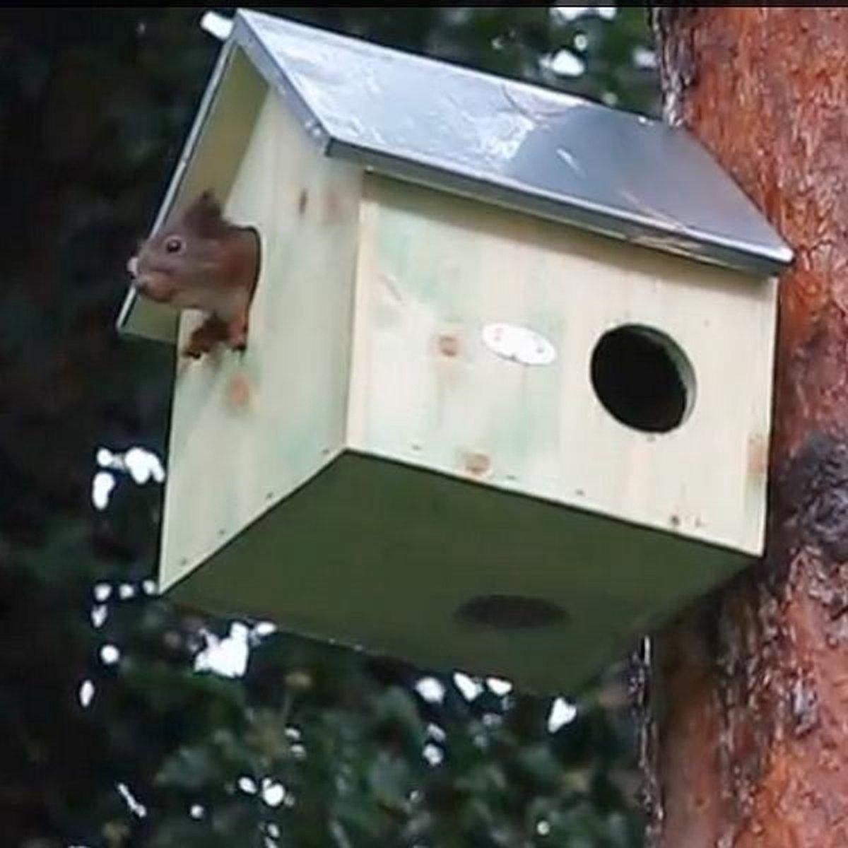 Woonhuisje voor Eekhoorns - Eekhoornhuisje - 2 stuks