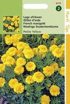 Hortitops Zaden - Tagetes Patula Nana Petite Yellow