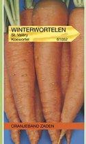 Oranjeband Winterwortel Saint Valery