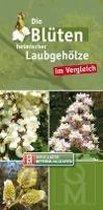 Die Blüten heimischer Laubgehölze im Vergleich - Bestimmungskarten