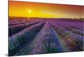 Een veld gevuld met lavendel Aluminium 180x120 cm - Foto print op Aluminium (metaal wanddecoratie) XXL / Groot formaat!