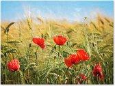 Klaprozen en Helmgras - Outdoor Schilderij op Canvas voor buiten