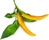Click and Grow Navulling - Gele Chili