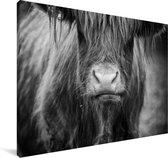 Schotse hooglander kalf zwart wit Canvas 60x40 cm - Foto print op Canvas schilderij (Wanddecoratie woonkamer / slaapkamer) / Wilde dieren Canvas Schilderijen