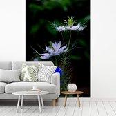 Fotobehang vinyl - Twee nigelle planten in de volle bloei breedte 190 cm x hoogte 280 cm - Foto print op behang (in 7 formaten beschikbaar)