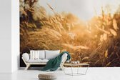 Fotobehang vinyl - Licht van de herfstzon schijnt op de goudkleurige graslanden breedte 420 cm x hoogte 280 cm - Foto print op behang (in 7 formaten beschikbaar)