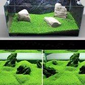 Aquarium Graszaad - Planten | Small Leaf