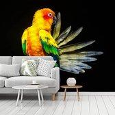 Fotobehang vinyl - Een  Zonparkiet laat zijn vleugels zien breedte 300 cm x hoogte 240 cm - Foto print op behang (in 7 formaten beschikbaar)