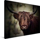 Donkere afbeelding van een Schotse hooglander Canvas 80x60 cm - Foto print op Canvas schilderij (Wanddecoratie woonkamer / slaapkamer) / Wilde dieren Canvas Schilderijen