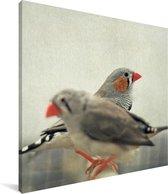 Twee zebravinken zitten naast elkaar Canvas 50x50 cm - Foto print op Canvas schilderij (Wanddecoratie woonkamer / slaapkamer)