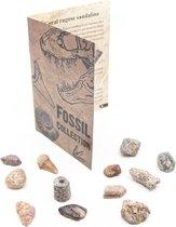 Fossiel Collectie – 12 stuks