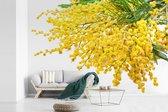 Fotobehang vinyl - Veel mimosa planten op een witte achtergrond breedte 360 cm x hoogte 240 cm - Foto print op behang (in 7 formaten beschikbaar)