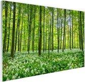 Groene bomen in het bos Glas 180x120 cm - Foto print op Glas (Plexiglas wanddecoratie) XXL / Groot formaat!