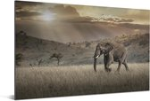 Olifant in het savannegebied in het Masai Mara National Park in Kenia Aluminium 60x40 cm - Foto print op Aluminium (metaal wanddecoratie)