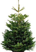 Echte kerstboom - Nordmann Excellent - 150-175 cm