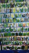 Aquariumplanten - Anubias mix
