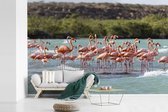 Fotobehang vinyl - Een grote groep rode flamingos staan in het water breedte 600 cm x hoogte 400 cm - Foto print op behang (in 7 formaten beschikbaar)