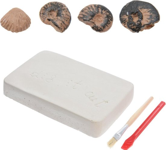 Free and Easy fossielen ontdekset Benthos Fossils