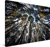 Zicht op boomtoppen vanuit het Argentijnse Nationaal park Nahuel Huapi Canvas 90x60 cm - Foto print op Canvas schilderij (Wanddecoratie woonkamer / slaapkamer)