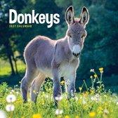 Donkeys Square Wall Calendar 2021