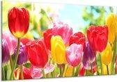 Glasschilderij Tulpen | Rood, Geel, Paars | 120x70cm 1Luik | Foto print op Glas |  F006001