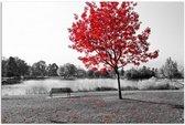 Schilderij - Rode boom in zwart en wit, 1 deel