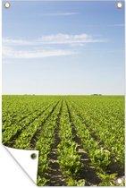 Een land vol suikerbieten tuinposter 60x90 cm - Tuindoek / Buitencanvas / Schilderijen voor buiten (tuin decoratie)