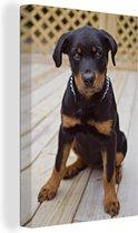 Rottweiler puppy zit Canvas 90x140 cm - Foto print op Canvas schilderij (Wanddecoratie woonkamer / slaapkamer) / Huisdieren Canvas Schilderijen