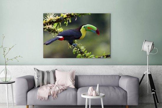 Toekan op een bloeiend takje Canvas 180x120 cm - Foto print op Canvas schilderij (Wanddecoratie woonkamer / slaapkamer) XXL / Groot formaat!
