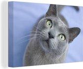 Burmese kat met mooie ogen Canvas 180x120 cm - Foto print op Canvas schilderij (Wanddecoratie woonkamer / slaapkamer) / Huisdieren Canvas Schilderijen XXL / Groot formaat!