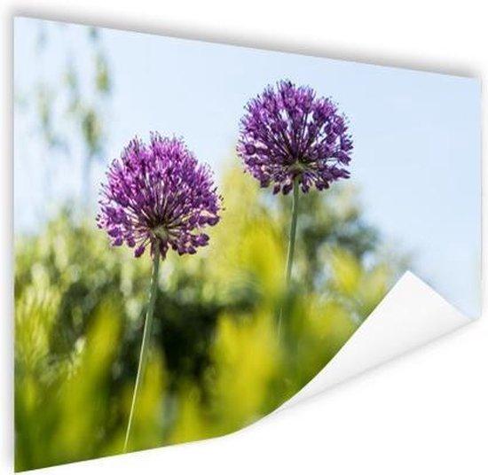 Paarse allium Poster 60x40 cm - Foto print op Poster (wanddecoratie woonkamer / slaapkamer) / Bloemen Poster