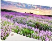 Paarse bloemenzee Tuinposter 60x40 cm - klein - Tuindoek / Buitencanvas / Schilderijen voor buiten (tuin decoratie)