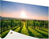 Wijngaard in Duitsland foto Tuinposter 60x40 cm - klein - Tuindoek / Buitencanvas / Schilderijen voor buiten (tuin decoratie)