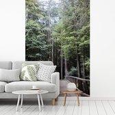 Gang door bomen in bos Big Sur in Verenigde Staten fotobehang vinyl breedte 215 cm x hoogte 320 cm - Foto print op behang (in 7 formaten beschikbaar)