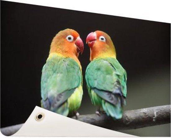 Lovebirds papegaaitjes  Tuinposter 200x100 cm - Foto op Tuinposter / Schilderijen voor buiten (tuin decoratie)